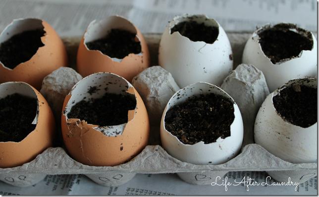 eggstarters