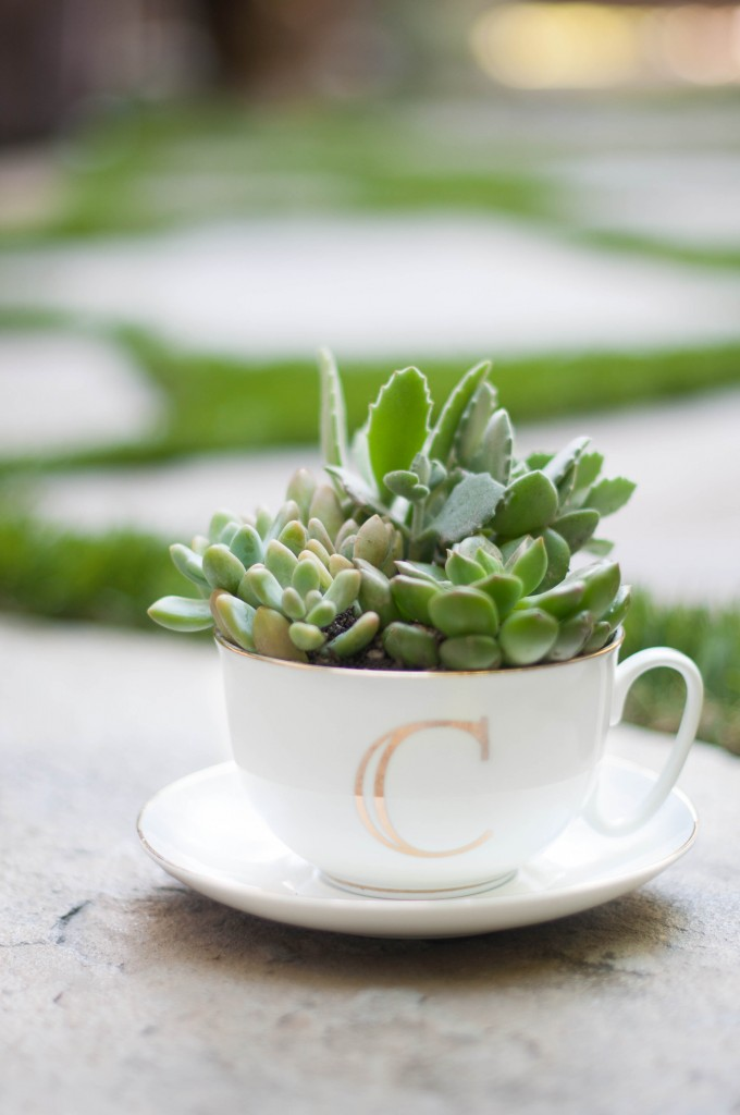 Tea cup succulent arrangement plus more hostess gift ideas